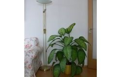 Houseplants perigosas