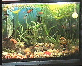 aquarium wie man fische halten tipps f r anf nger. Black Bedroom Furniture Sets. Home Design Ideas