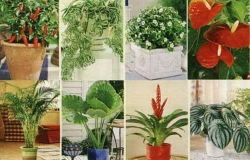 Houseplants medicinais